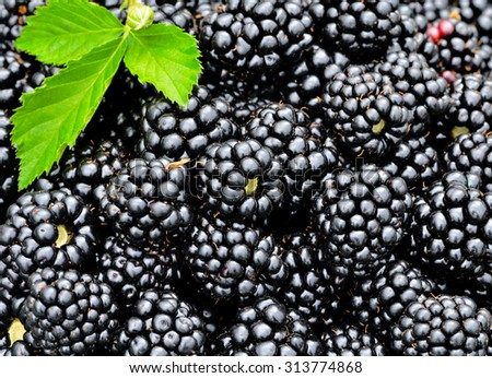 Fresh ripe blackberries with green leaves background - stock photo