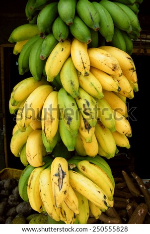 Fresh Ripe Bunch of Bananas at the Market - stock photo