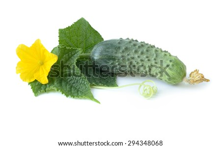 Fresh ripe cucumber with leaves and flower. Isolated on white background - stock photo