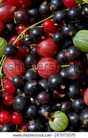 Fresh ripe perfect berrys. Food  Background  - stock photo