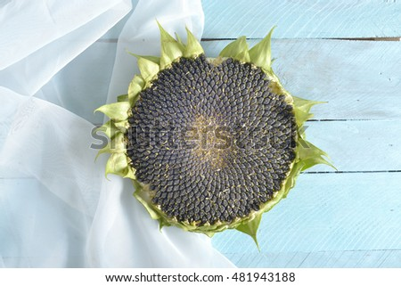 fresh ripe sunflower on white wooden background