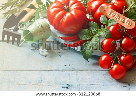 Fresh ripe tomatoes and gardening tools on an old wooden board. - stock photo