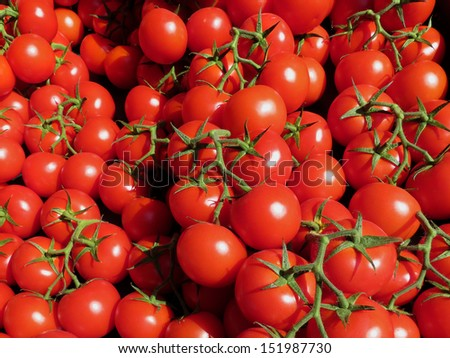 Fresh ripe tomatoes in the market