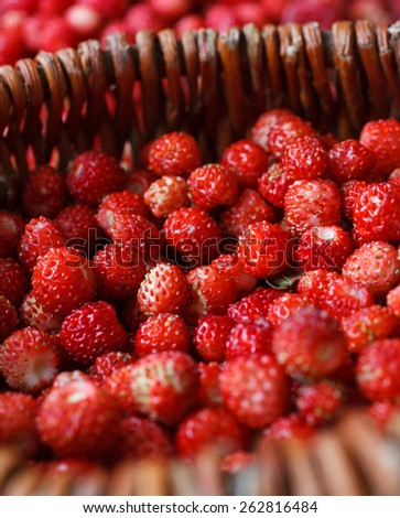 Fresh ripe wild strawberries in a basket on a wooden table - stock photo
