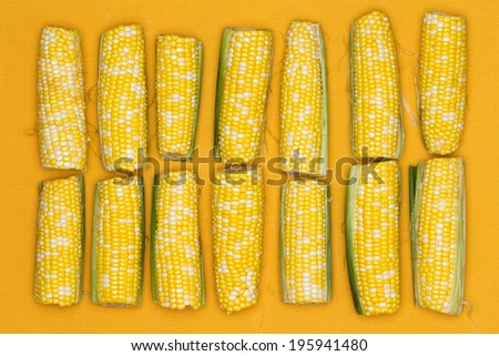 Fresh ripe yellow corn on the cob lined up in a double row on a yellow background for healthy vegetarian and vegan cuisine, overhead view - stock photo