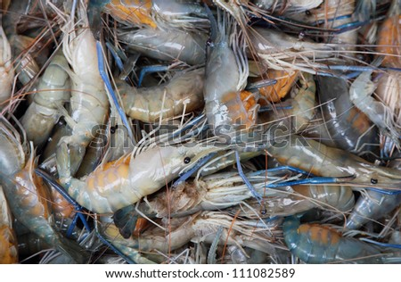 fresh river prawn from the market