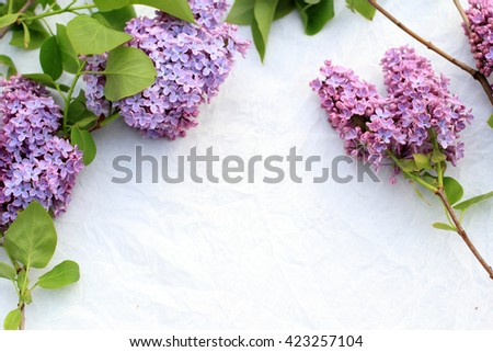 Fresh, romantic lilac branches on white subtle background