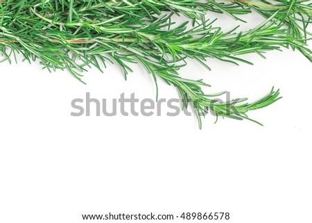 Fresh Rosemary Frame isolated in white background