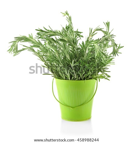Fresh rosemary in bucket, isolated on white