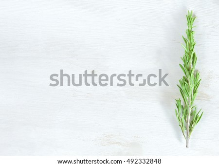 Fresh rosemary twig on white wooden background with copyspace
