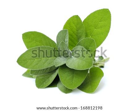 fresh sage on white background - stock photo