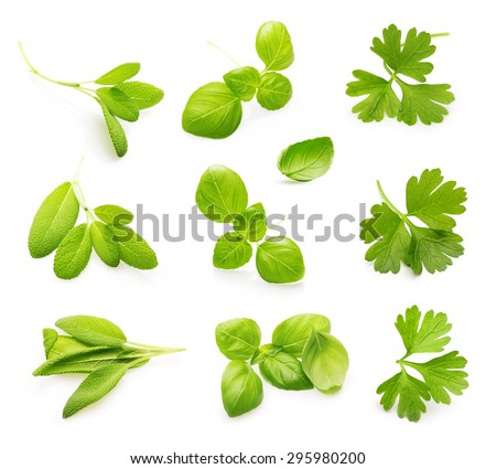 Fresh sage, Parsley herb, basil leaves isolated on white background. - stock photo