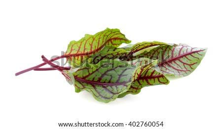 Fresh salad leaves. - stock photo