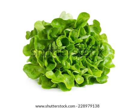 Fresh salad lettuce isolated on white background - stock photo