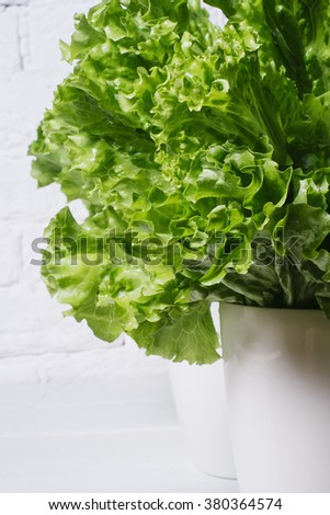 Fresh salad lettuce leaves on a background of white brick wall vertical isolated - stock photo
