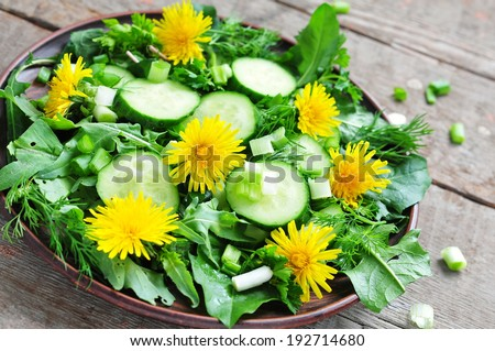 Fresh salad with cucumber, rucola, green onion and dandelion's flowers - stock photo