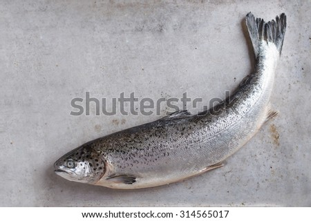 Fresh salmon on stone background, selective focus