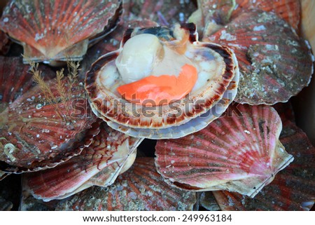 fresh scallops at french fish market - stock photo