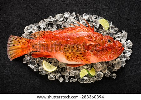 Fresh scorpion fish on ice on a black stone table top view - stock photo