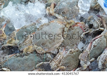 Fresh sea crab for cooking in market