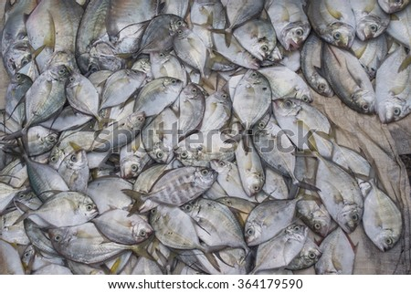 Fresh Sea Fish For Selling In Local Market.