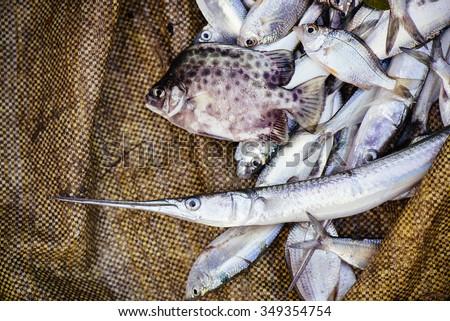 Fresh sea fish on the market in Fort Kochi (Cochin), Kerala, India. - stock photo