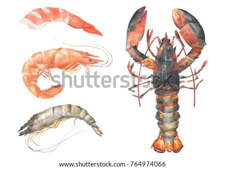 Fresh Sea Foodlobstershrimpprawn Shrimp Cocktail Set Stock Illustration 764974066