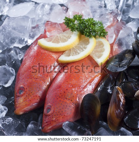 Fresh seafood, clams and two Strawberry Grouper on ice - stock photo