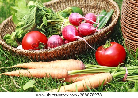 fresh seasonal organic vegetables - stock photo