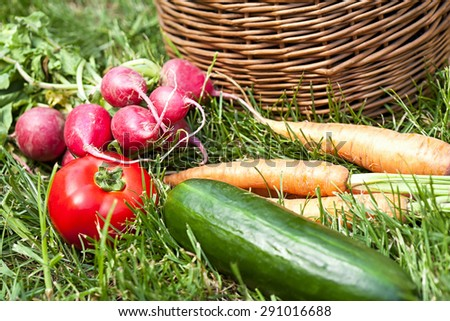 fresh seasonal organic vegetables