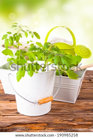 Fresh seedling, young plant on wooden background. Garden concept. Nature transplant. - stock photo