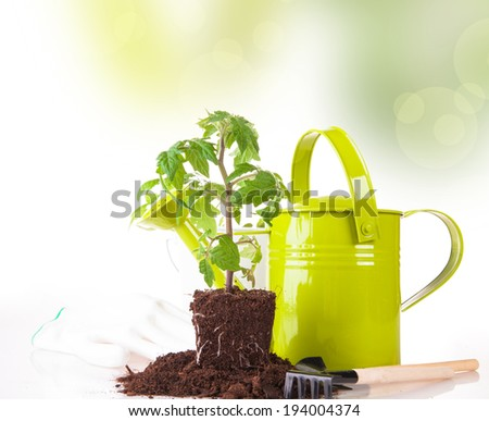 Fresh seedling, young plant on wooden background. Garden concept. Nature transplant. Abstract background. - stock photo