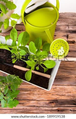 Fresh seedling, young plant on wooden  background. Nature transplant. Garden concept. - stock photo