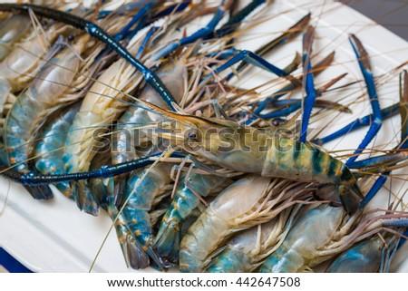 Fresh shrimp - stock photo