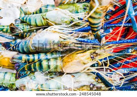 Fresh shrimp at seafood market, Thailand - stock photo