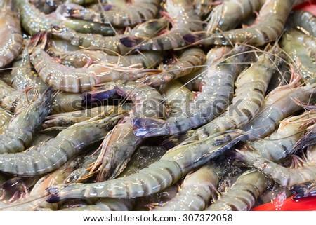 Fresh shrimp at the market - stock photo