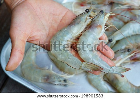 Fresh Shrimp in Thai market
