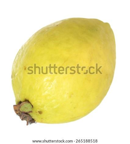 fresh single guava isolated on white background  - stock photo