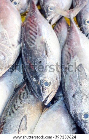 Fresh Small Tuna Fish on ice at weekend fishers market  - stock photo