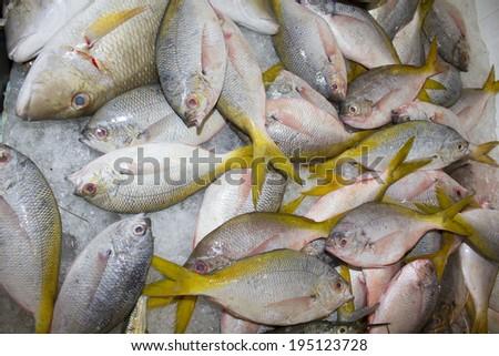 Fresh Snapper fish at seafood market - stock photo