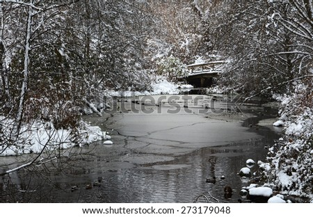 fresh snow winter Christmas scenic landscape trees ducks