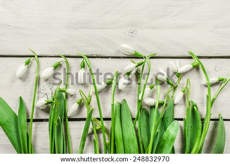 Fresh snowdrop flowers on a bright wooden background - stock photo