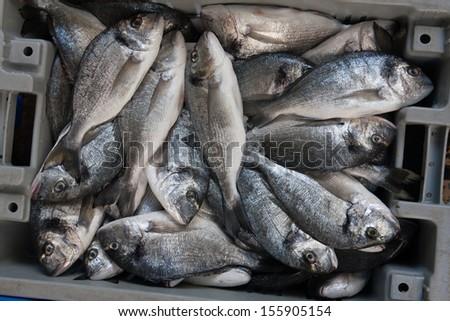 fresh Sparus aurata fish in a box - stock photo