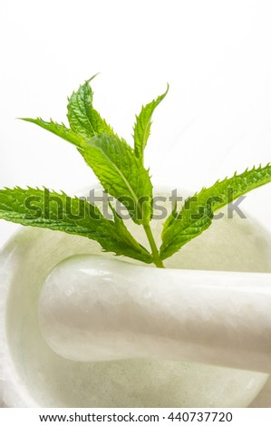 Fresh spearmint herb Mentha in the marble mortar with a pestle, on a white background