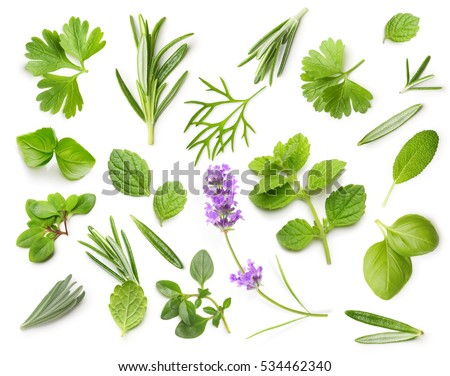 Fresh spices and herbs isolated on white background
