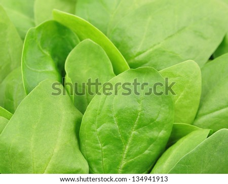 Fresh spinach,background, isolated