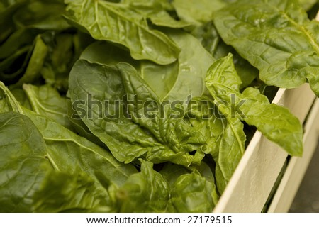 Fresh spinach (horizontal)