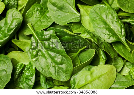 fresh spinach leaves or spinach salad background