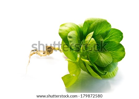 fresh Spinach vegetables isolated on white background - stock photo