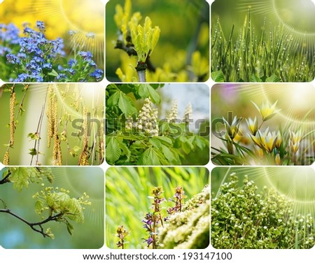Fresh Spring background - photo collage